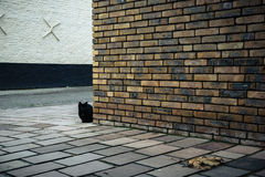 Black cat behind the brick wall on the street in Bruges, Belgium Stock Photography