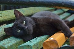 Black cat on the bench royalty free stock images