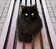 Black cat on a bench. POV black cat with a mysterious look sitting on a bench. Close up stock photos