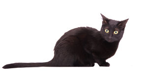 Black cat with a bewildered look on her face. On white Stock Photo