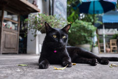 Black cat. With big yellow eyes Stock Image