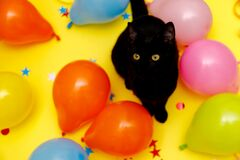 Black cat in a birthday confetti and balloons on yellow background