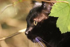 Black cat. In the sun royalty free stock photos