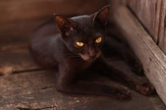 A black cat. Who was looking ahead stock photos