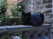 Black Cat Resting On A Fence Stock Photos