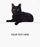 Black cat on the blank banner. Black cat lying on white blank banner isolated on white backgroung Royalty Free Stock Photo