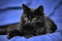 Black cat Royalty Free Stock Photography