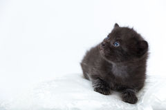 Black cat with blue eyes Stock Photography