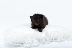 Black cat with blue eyes. Young Black cat with blue eyes is resting on the pillow. Semi- image. Nice for copy space message royalty free stock photos