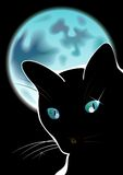 Black cat. And blue moon Stock Photo