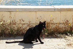 Black cat. On booty in Spain Stock Images