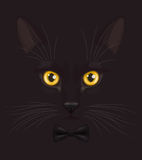 Black cat with bow-tie. Muzzle of short-haired black cat with big yellow eyes, with stylish black bow-tie on neck, at dark background Stock Photo
