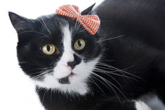 Black cat with a bow Royalty Free Stock Photo