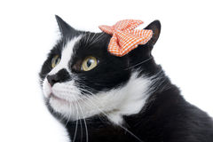Black cat with a bow Stock Photography