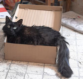 Black cat in a box Royalty Free Stock Photos