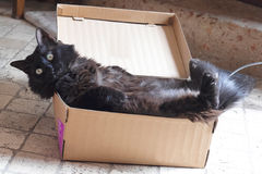 Black cat in a box Stock Photography