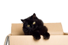 Black cat in box isolated Stock Photography