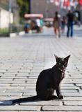 Black cat with a bracelet Royalty Free Stock Photography