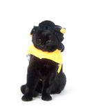 Black cat in bumblebee outfit Royalty Free Stock Images