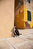 Black cat in Burano, Venice. Domestic cat stock photos