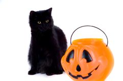 Black Cat and Candy Pumpkin. royalty free stock photo
