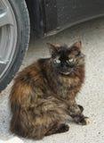 Black cat by car. Wild hirsute Black cat by car Royalty Free Stock Photos