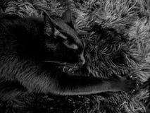 Black cat black carpet stock photos