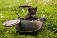 Calico kitten in cast iron kettle Royalty Free Stock Images