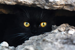 Black cat. In a cave, his eyes like fire, glow in the dark Royalty Free Stock Photo