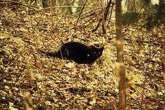 Black cat in the Central Park Stock Image