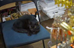 Black cat on a chair. Royalty Free Stock Photo