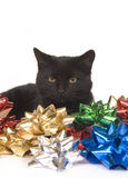 Black cat and christmas bows Stock Images