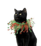 Black cat with Christmas collar Stock Photos