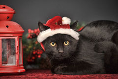 Black cat in Christmas hat Stock Photography