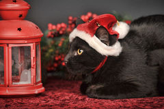 Black cat in Christmas hat Royalty Free Stock Image