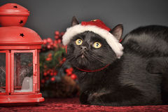 Black cat in Christmas hat Stock Photo