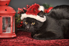 Black cat in Christmas hat Stock Photos
