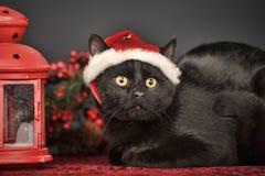 Black cat in Christmas hat Stock Image