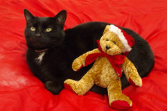 Black cat with Christmas Teddy Bear. On red silk effect fabric Royalty Free Stock Photos