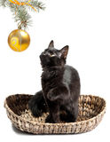 Black cat and Christmas toys Stock Photo