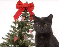 Black cat with Christmas tree in background Stock Photos