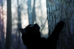 Black cat climbs a tree. Winter background Royalty Free Stock Photography