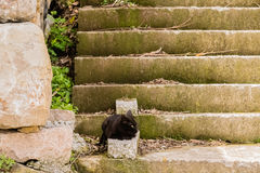Black cat on concrete steps Stock Image