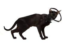 Black cat in a cone Stock Photo