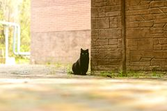 The black cat on the corner of the building, at home. Domestic black cat sits against the corner of a small stone house and stares intently in front of himself royalty free stock images