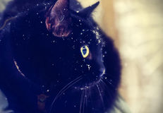 Black cat covered with snow Royalty Free Stock Photos