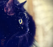 Black cat covered with snow Stock Image