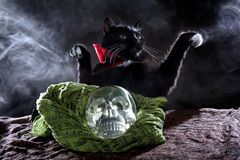 Black Cat with a Crystal Skull Stock Image