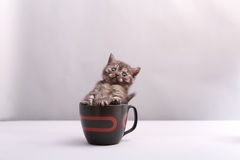 Black cat in a cup Royalty Free Stock Image