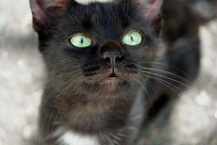Black cat. Curious green eyed domestic animal, pet, close-up, face Royalty Free Stock Images